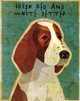 Irish Red and White Setter Fine-Art Print