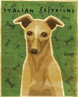 Italian Greyhound - Fawn Fine-Art Print