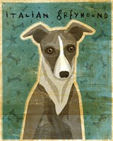 Italian Greyhound - White and Grey Fine-Art Print