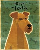 Irish Terrier Fine-Art Print