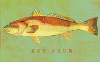 Red Drum Fine-Art Print