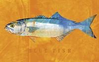 Bluefish Fine-Art Print