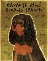 Cavalier King Charles (black and tan) Fine-Art Print