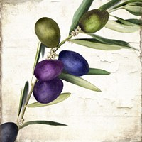 Olive Branch III Fine-Art Print