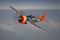 A Republic P-47D Thunderbolt Fine-Art Print