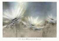 Beachside Daisies Fine-Art Print