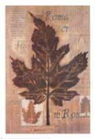 Harvest II Fine-Art Print