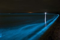 Bioluminescence in Waves in the Gippsland Lakes Fine-Art Print