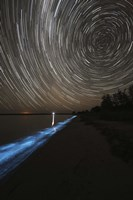 Star Trails over Bioluminescence Fine-Art Print