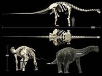 Anatomy of a Titanosaur Fine-Art Print