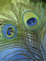 Peacock Candy I Fine-Art Print