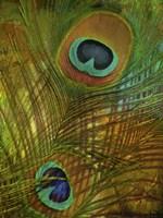Peacock Candy II Fine-Art Print