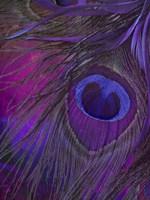 Peacock Candy IV Fine-Art Print