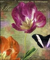 Aubergine Peony Fine-Art Print