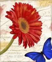 Gerbera Daisy Fine-Art Print