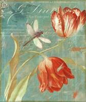 Mandarin Tulips Fine-Art Print
