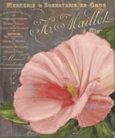 Peach Hibiscus Fine-Art Print