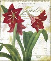 Peppermint Amaryllis Fine-Art Print