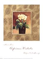 African Violets Fine-Art Print