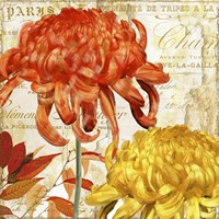 Chrysanthemes I Fine-Art Print