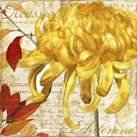 Chrysanthemes II Fine-Art Print