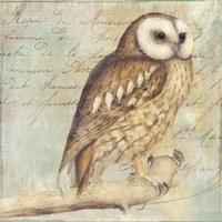 White-Faced Owl Fine-Art Print