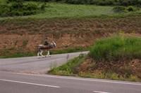 Old man rides a donkey loaded with wood, Anguiano, La Rioja, Spain Fine-Art Print