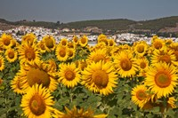 Spain, Andalusia, Cadiz Province, Bornos Sunflower Fields Fine-Art Print