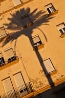 Spain, Cadiz, Campo del Sur, Palm Shadow Fine-Art Print