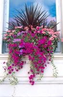 Flower Box in London, England Fine-Art Print