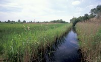 Wicken Fen, Cambridgeshire, England Fine-Art Print