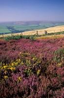 Cosgate Hill, Exmoor, Devon, England Fine-Art Print
