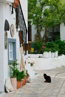Street View with Black Cat, Manolates, Samos, Aegean Islands, Greece Fine-Art Print