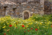 Old building and wildflowers, Island of Spinalonga, Crete, Greece Fine-Art Print