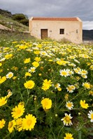 Wildflowers and church of St, Island of Spinalonga, Crete, Greece Fine-Art Print