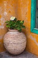 Flower in pot, Crete, Greece Fine-Art Print