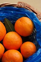 Basket of Oranges, Greece Fine-Art Print