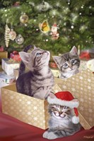 Kittens and Butterfly Under The Tree Fine-Art Print