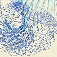 Vintage Jellyfish I Fine-Art Print