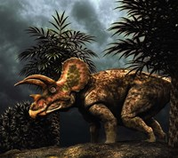 Triceratop, Herbivorous Dinosaur from the Cretaceous Period Fine-Art Print