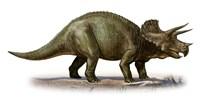 Triceratops Dinosaur 6 Fine-Art Print