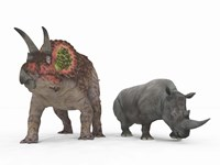 An adult Triceratops Compared to a modern adult White Rhinoceros Fine-Art Print