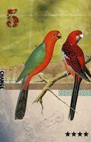 Birds Fine-Art Print