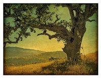 Blue Oak Hilltop Fine-Art Print