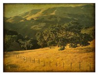 Oak and Fence Fine-Art Print