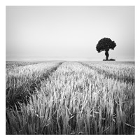 The Wheat Field Fine-Art Print