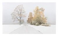 Autumn Snowfall Fine-Art Print