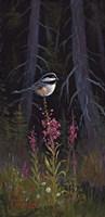 Fireweed Chickadee Fine-Art Print