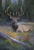 South Fork Bull Fine-Art Print