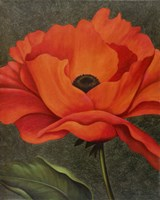 Red Poppy Fine-Art Print